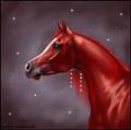 horseriding4life