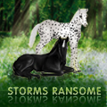 storms ransome