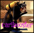 caribooster