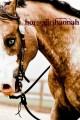 horsegirlhannah