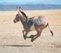 donkeyshot