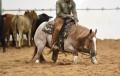 aqha cowgirl