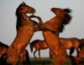horses4you