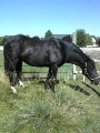 horserider201