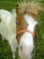 shinyhorse8