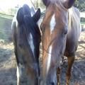 sandman stables