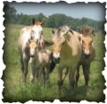 horses4lifetime