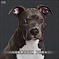 ambrosia park