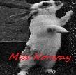 miss norway