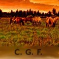 countrygalforever