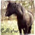 callistur