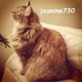 jasmine730