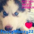 fuzzywuzzy22