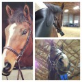 horses_luver