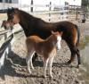 spanishhorses:)
