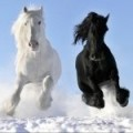 horseinator