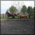 horsebandit41