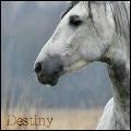horse196