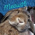 meow16