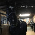 hoofwing