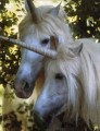 horses of angel