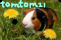 tomtom21