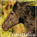 primehellix