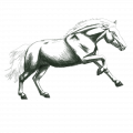ebanyhorse
