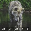 mfm10