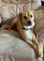 ponyluver236