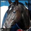 theo_horse
