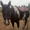 horseluvr2