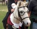 potterhorse