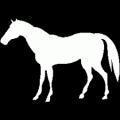 saddles79