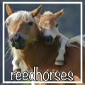 reedhorses