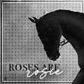 roses_are_rosie
