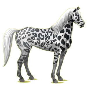 Riding Horse Mustang Black Blanket