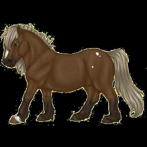 Pony Australian Pony Flaxen Liver chestnut