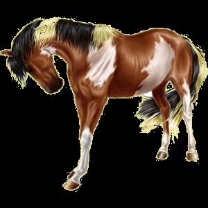 Riding Horse Paint Horse Dark bay Overo