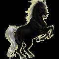 Riding Horse Appaloosa Chestnut Blanket