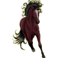 Riding Horse Paint Horse Bay Tovero