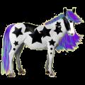 Pony Newfoundland Pony Bay