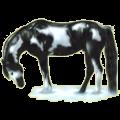 Riding Horse Paint Horse Black Tobiano