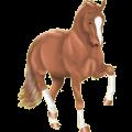 Pegasus Hanoverian Liver chestnut