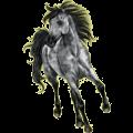 Riding Horse Appaloosa Palomino Blanket