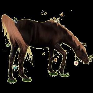 Riding Horse Mustang Flaxen Liver chestnut