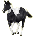 Riding Horse Paint Horse Black Tobiano