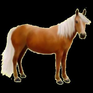 Pony Australian Pony Palomino