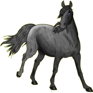 Riding Horse Irish Hunter Dapple Gray