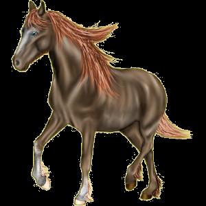 Riding Horse Standardbred Dun